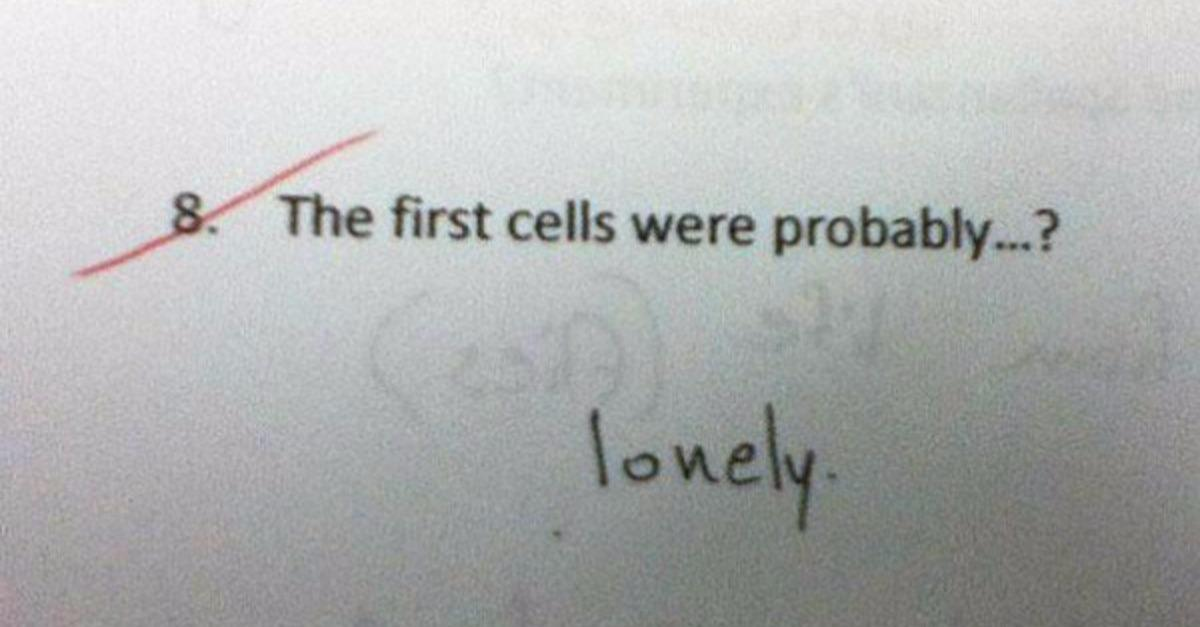 25 Wrong Test  Answers That Are Genius