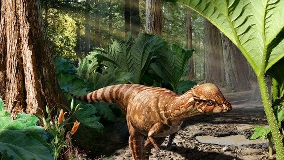 A Real Bonehead: Dome-Skulled Dino Discovered