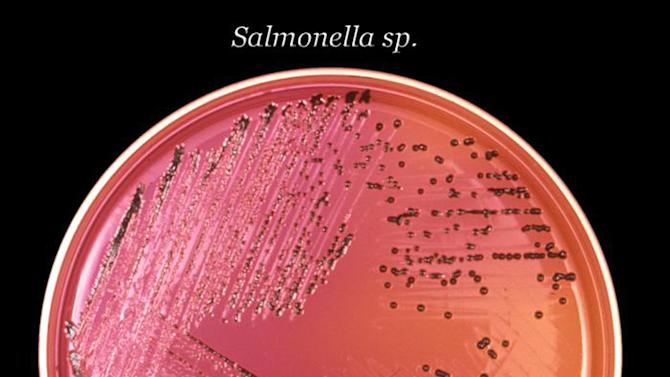 This undated image provided by the Centers for Disease Control and Prevention (CDC) shows Salmonella bacteria in a petri dish. It's about to get faster and easier to diagnose food poisoning _ but that progress for individual patients comes with a downside: It could hurt the nation's ability to spot and solve dangerous outbreaks. Next-generation tests that promise to shave a few days off the time needed to tell if E. coli, salmonella or other foodborne bacteria are to blame for a patient's illness could reach medical laboratories as early as next year.(AP Photo/CDC)