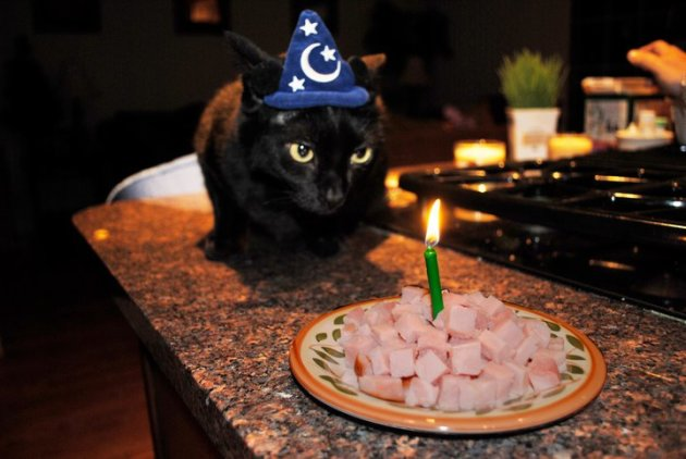 6. Your Cat Gets Birthday Parties