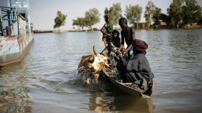 Malians bring a cow across the Niger river at Korioume Port, south of Timbuktu, Mali, Sunday Feb. 3, 2013. French troops launched airstrikes on Islamic militant training camps and arms depots around Kidal and Tessalit in Mali's far north, defense officials said Sunday, as the first supply convoy of food, fuel and parts to eastern Mali headed across the country. (AP Photo/Jerome Delay)