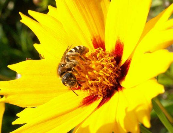 Bees Get a Buzz from Flowers' Electrical Fields