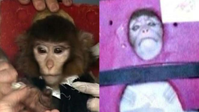 Is this the same monkey?