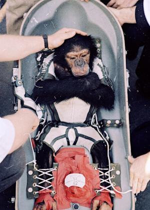 FILE - In this Jan. 31, 1961 file photo, Ham, the first higher primate launched into outer space, is comforted by an unidentified man on the deck of a rescue ship after the splashdown in the Atlantic Ocean.   Chimpanzees should hardly ever be used for medical research, a prestigious scientific group told the government Thursday _ advice that means days in the laboratory may be numbered for humans' closest relatives. The Institute of Medicine stopped short of recommending the outright ban that animal rights activists had pushed. Instead, it urged strict limits that would make invasive experiments with chimps essentially a last resort, saying today's more advanced research tools mean the primates' use only rarely will be necessary enough to outweigh the moral costs.  (AP Photo, File)