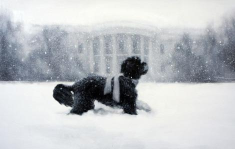 Bo Obama Stars in White House Holiday Card