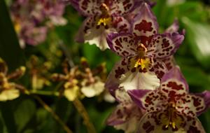 5 Surprising Facts About Orchids