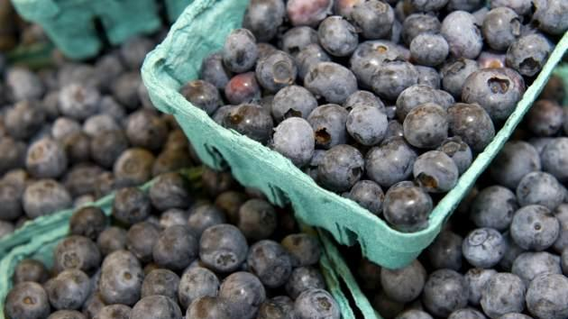 Blueberries -- Getty Premium
