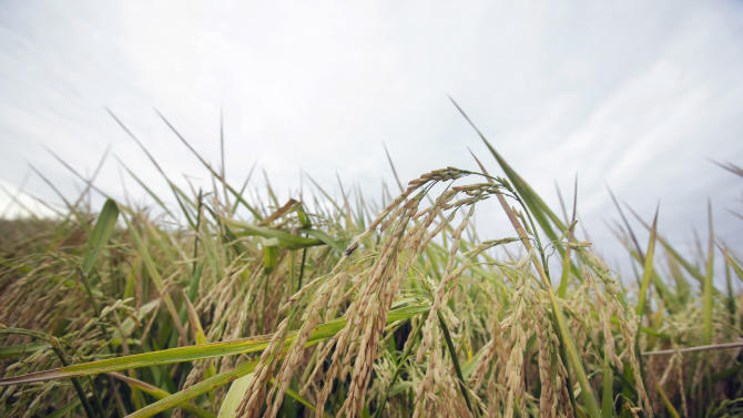 South Korea suspends bidding for US rice imports