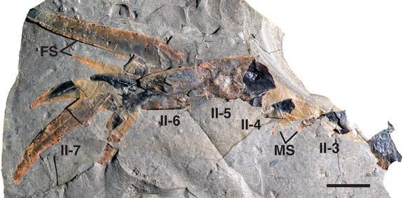 'Bizarre,' Human-Size Sea Scorpion Found in Ancient Meteorite Crater