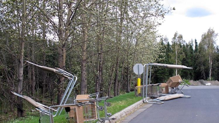 Grocery carts were blown to the side of the Carrs/Safeway parking lot in east Anchorage, Alaska, on Wednesday, Sept. 5, 2012. A massive windstorm uprooted trees, knocked out power and closed schools in Anchorage. (AP Photo/Mark Thiessen)