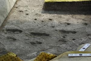 How Ancient Humans Walked: Their Footprints May Mislead