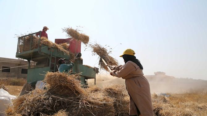 Residents harvest wheat in Houla, South Lebanon