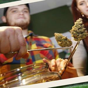 Pot merchants cash in on Christmas cannabis
