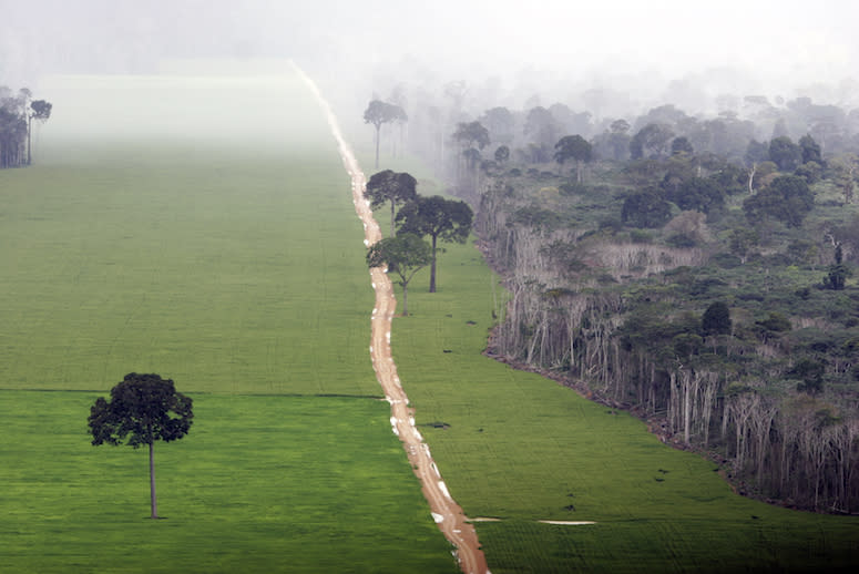 Big Ag Is Devastating the Amazon, but a New Plan Could Preserve Rainforests and Wildlife
