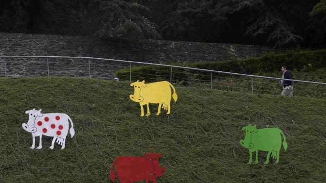 Cow cut-outs painted in the colors of cycling jersey winners announce the 103rd Tour de France cycling event, in Saint-Lo