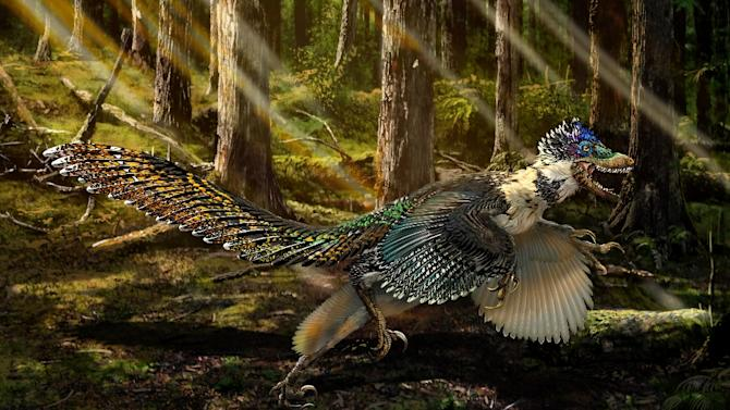 An artist's impression released on July 15, 2015 by Ministry of Land and Resources of China shows a reconstruction of the new short-armed and winged feathered dinosaur Zhenyuanlong suni from the Early Cretaceous (ca. 125 million years ago) of China