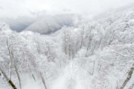 General view of the snow-covered trees and mountains above Rosa Khutor, one of the 2014 Winter Olympics venues, in the Black Sea city of Sochi on February 19, 2013. Russia has started to stockpile hundreds of thousands of cubic metres of snow to ensure the 2014 Winter Olympics in Sochi is not hit by unpredictable weather conditions