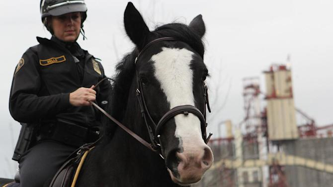 In a Nov. 15, 2013 photo, Officer Cassandra Wells takes Murphy the police horse out for a ride, in Portland, Ore. Murphy, who had had to lose 200 pounds before he could join the Portland Police Bureau's Mounted Patrol Unit, has collared his first bad guy. Murphy, carrying Officer Wells, chased down a man suspected of breaking into a building on Friday, June 20, 2014 and kept him trapped next to a building until officers could cuff him. (AP Photo/The Oregonian, Dave Killen)