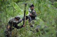 "Soldiers of Bolivia's Joint Task Force destroy coca plantations in the jungle in Caranavi, a locality north of La Paz, in June 2012. US President Barack Obama Friday accused Myanmar, Bolivia and Venezuela of having ""failed demonstrably"" to fight the drug trade, but said aid to those countries remains vital to US interests"