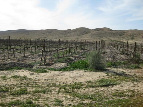 By using walls to channelize and collect floodwaters, ancient farmers made the most of scant rainfall to grow crops in the desert. These techniques are still used today, like in this vineyard near Sede Boqer, Israel.