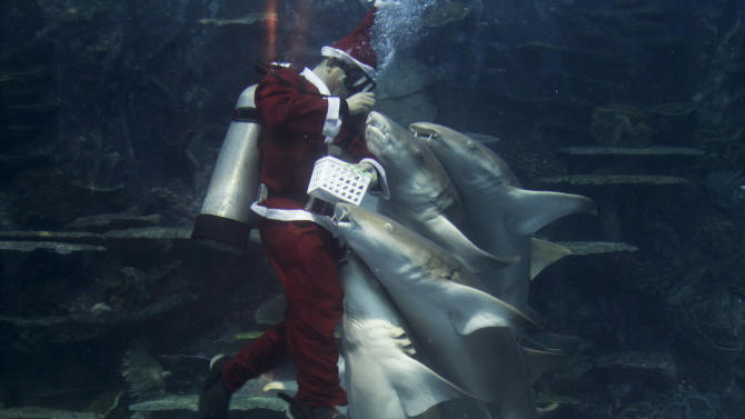 A professional diver wearing a Santa Claus suit feeds sharks inside a giant aquarium as part of celebrations for Christmas at the Manila Ocean Park