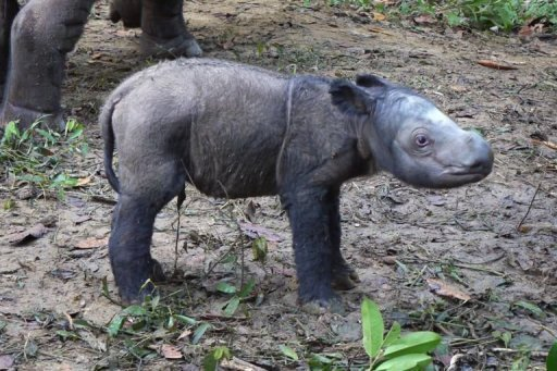 """Andatu"" was born at an Indonesian sanctuary, on the southern tip of Sumatra island"