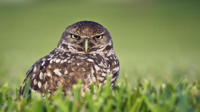 What time is the Superb Owl?