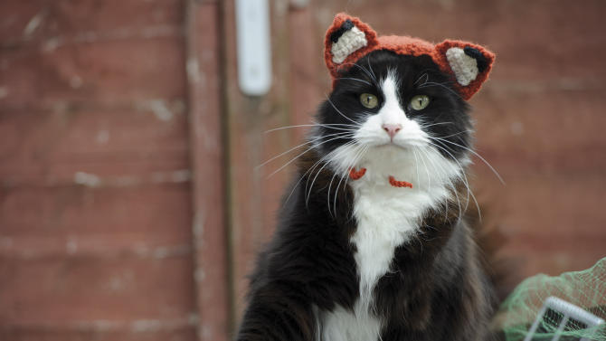 "This photo provided by Running Press and Quarto, Inc. shows Feline Fox from the book, ""Cats in Hats,"" published by Running Press. The book released on March 24, 2015.  (Liz Coleman/Running Press/Quarto, Inc. via AP)"