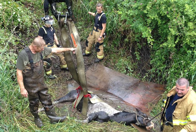 Photo of horse being rescued from mud hole. (Marion County Fire District No. 1)