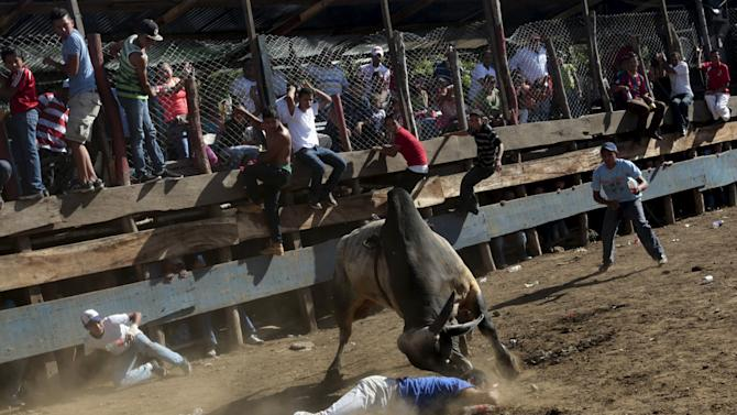 A man is tossed by a bull during festivities honouring the capital's patron saint Santo Domingo de Guzman in Managua