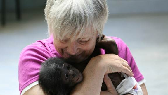 Pick Me Up! Apes and Human Babies Use Similar Gestures