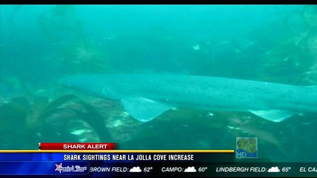 Shark sightings near La Jolla Cove on the rise