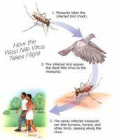 First Dead Bird Tests Positive For West Nile Virus in San Mateo County