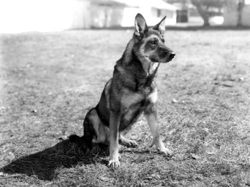 The Original Rin Tin Tin