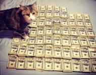 Tumbl'heure : Money Cat