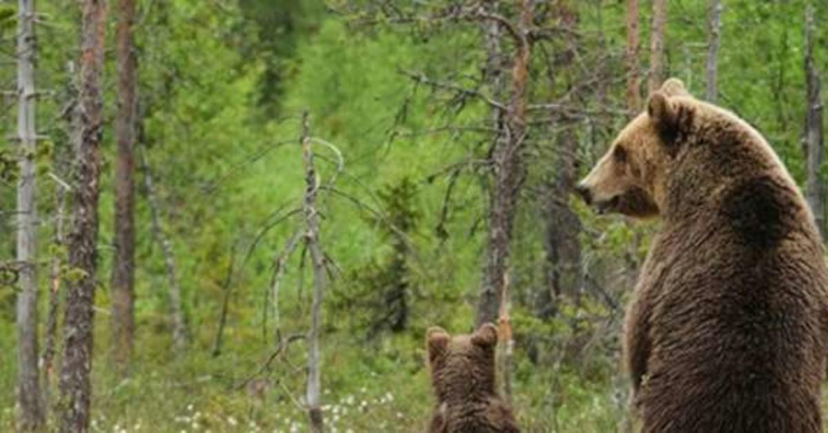 15 Stunning Images of Animal Parenting in The Wild