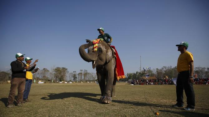 An adorned elephant displays its skills near the judges during the elephant beauty contest organised at the Elephant Festival event at Sauraha in Chitwan
