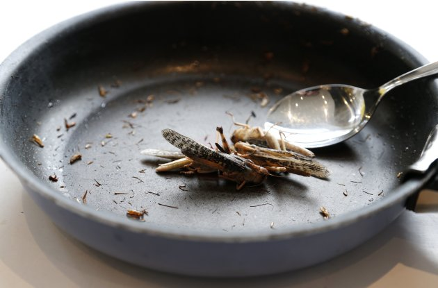 Locusts are seen in a skillet� …