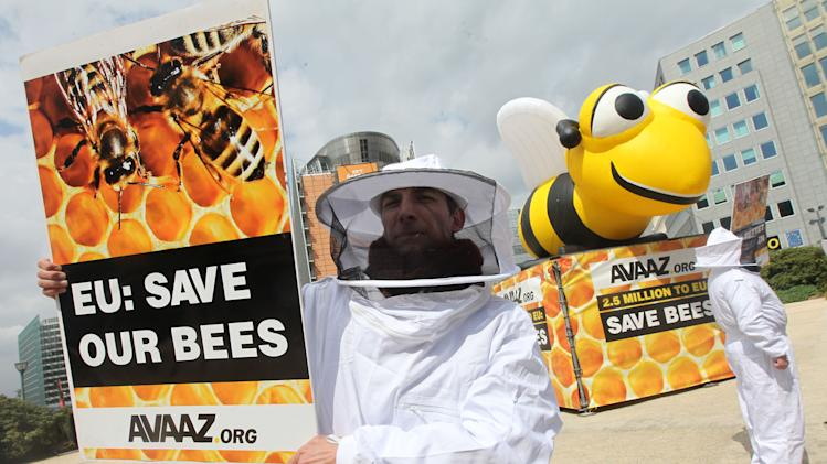 EU aims to better protect bees from pesticides