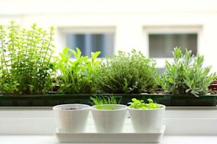 7 tips for growing a windowsill garden