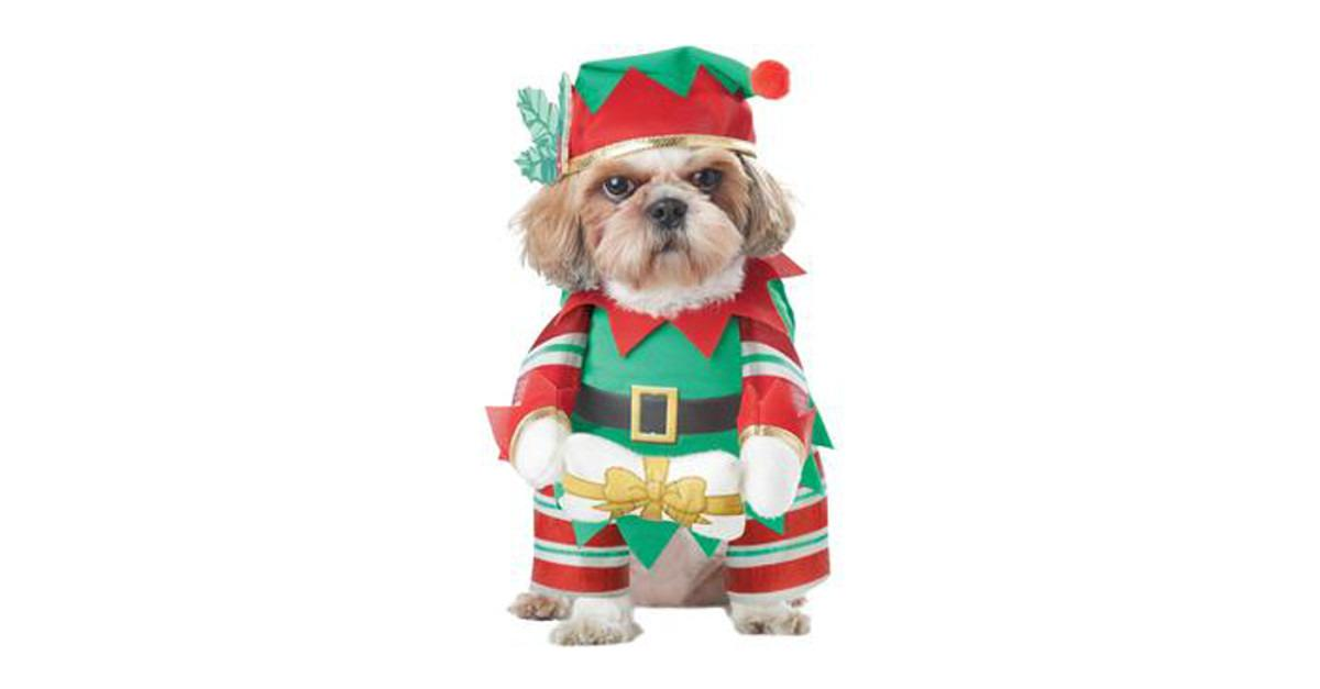 Top 7 Xmas Costumes For Your Dog