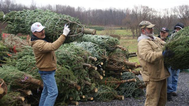 Christmas Trees for Sandy Victims