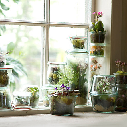 Canning Jar Terrariums