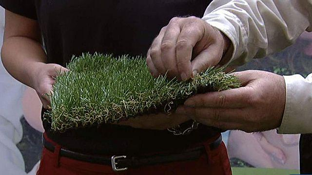 Synthetic turf replacing yawns?