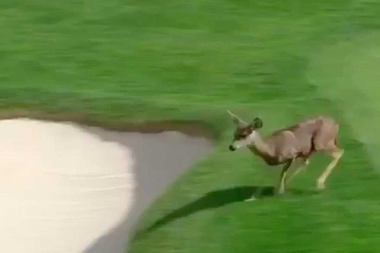 Golf Deer and Golf Otter have been the best part the Pebble Beach Pro-Am