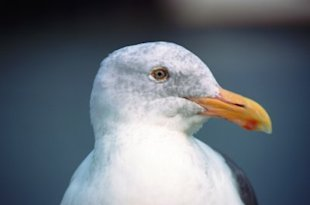 Yeah, I'm talking to you, GULL.