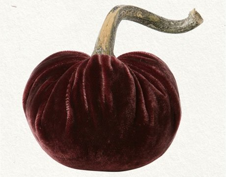 Little Velvet Pumpkin