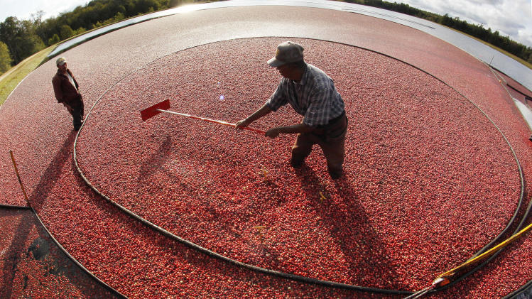 Cranberry farmers struggle as surplus drops prices