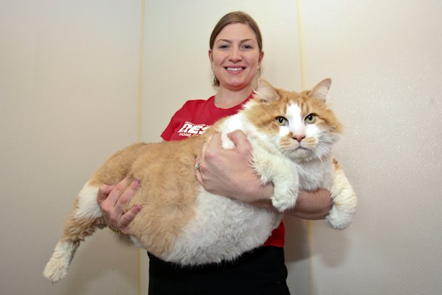 A 40-pound cat named (what else?) Garfield is on a strict diet after his owner passed away. The North Shore Animal League of America on Long Island hopes Garfield can lose two pounds a month. (Laurentiu Garofeanu/Barcroft Media/Landov)
