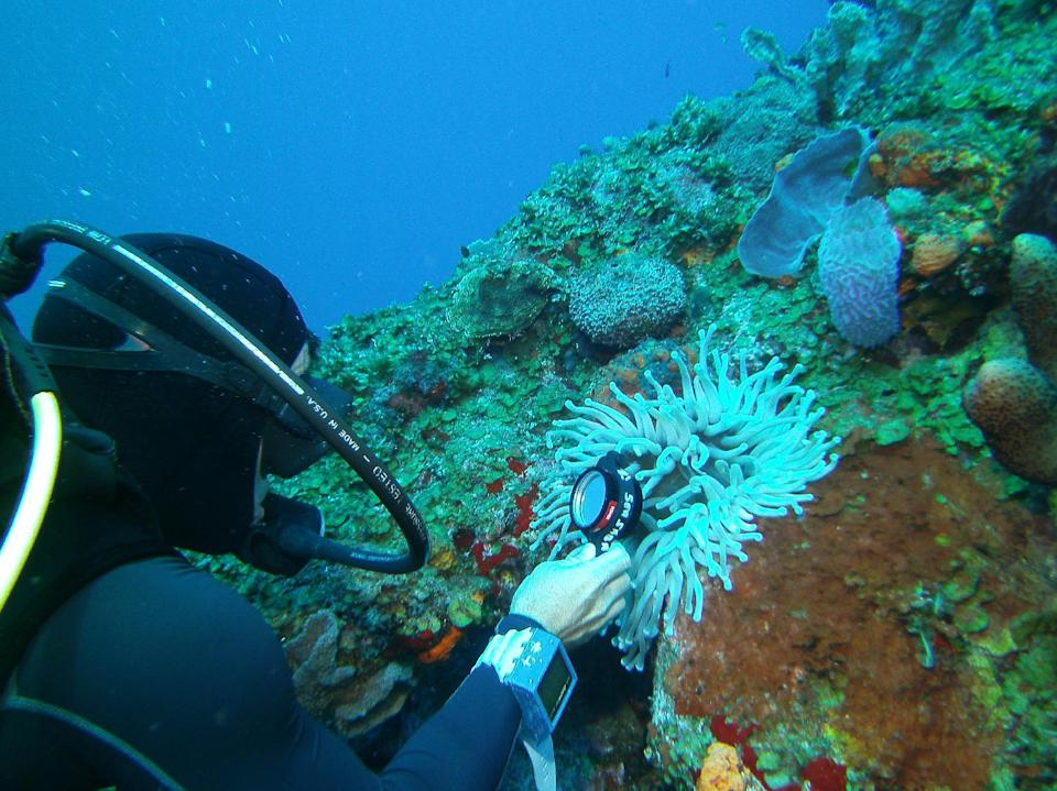 In this May 5, 2012 photo, a diver uses a magnifying glass to look for a shrimp inside an anemone during a dive at the Shark Shoal site in the Saba Marine Park in Saba, an island in the Caribbean. The island, a Dutch municipality, is popular with divers.  (AP Photo/Brian Witte)
